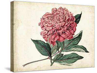 Peony Garden II-Curtis-Stretched Canvas Print