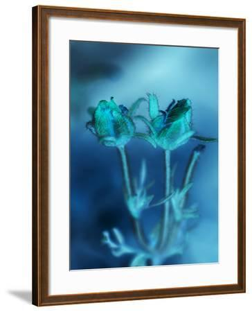Love Flowers III-Teton Parchment-Framed Photographic Print