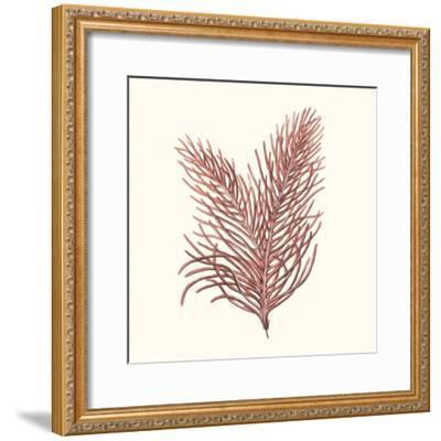 Seaweed Collection II-Vision Studio-Framed Art Print