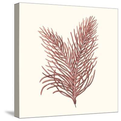 Seaweed Collection II-Vision Studio-Stretched Canvas Print