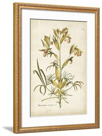 Elegant Botanical II-J^j^ Plenck-Framed Art Print