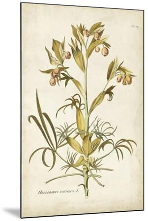 Elegant Botanical II-J^j^ Plenck-Mounted Art Print