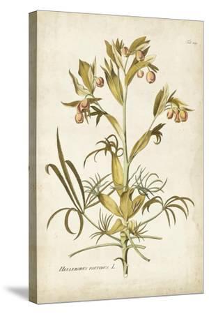 Elegant Botanical II-J^j^ Plenck-Stretched Canvas Print