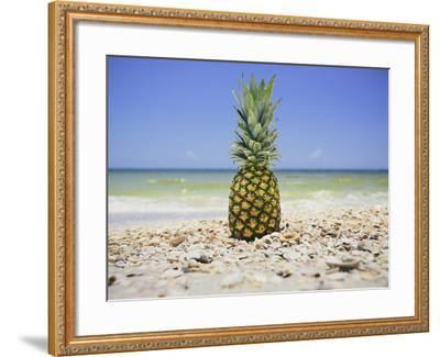 South Florida Pineapple II-Adam Mead-Framed Photographic Print
