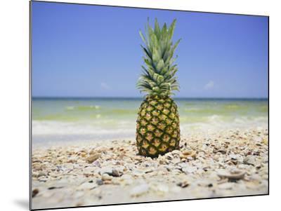 South Florida Pineapple II-Adam Mead-Mounted Photographic Print