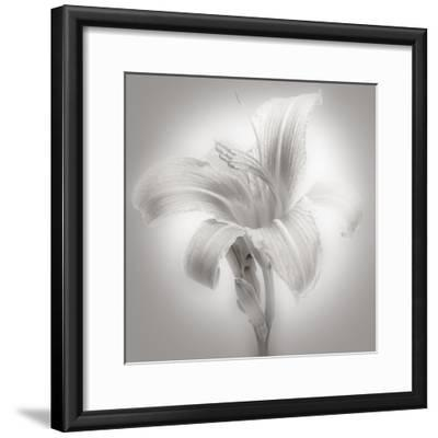 Tiger Lily II-James McLoughlin-Framed Photographic Print