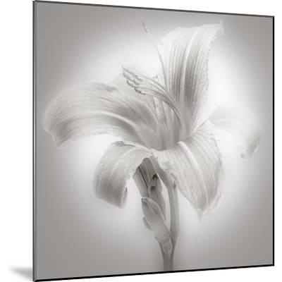 Tiger Lily II-James McLoughlin-Mounted Photographic Print