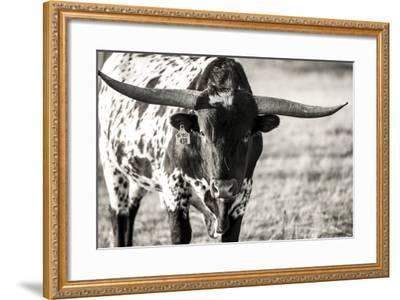 Longhorn Portrait-Tyler Stockton-Framed Photographic Print