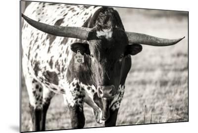 Longhorn Portrait-Tyler Stockton-Mounted Photographic Print