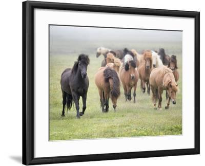 Grassland Horses II-PHBurchett-Framed Photographic Print