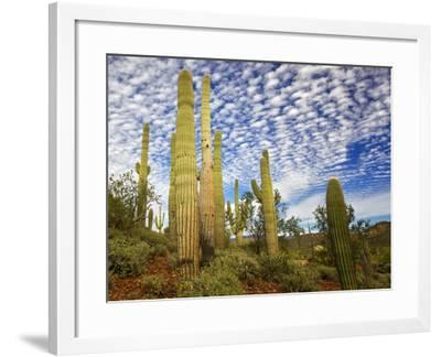 Cacti View III-David Drost-Framed Photographic Print
