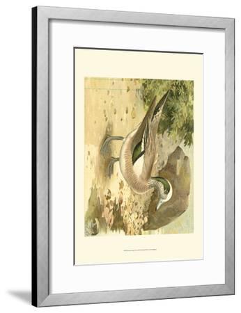 Green-wing Teal-Ridgeway-Framed Art Print