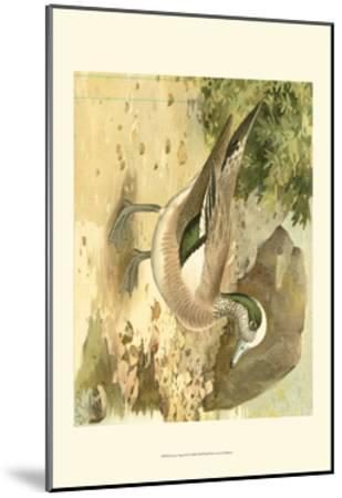 Green-wing Teal-Ridgeway-Mounted Art Print