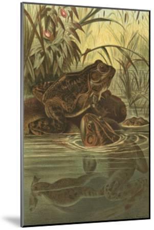 Pond Frogs- Prang-Mounted Art Print