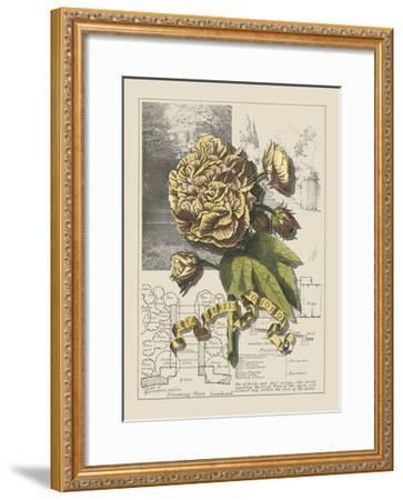 Garden in June II-Debbie Bookman-Framed Art Print
