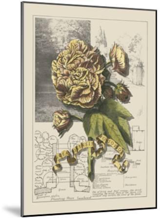 Garden in June II-Debbie Bookman-Mounted Art Print