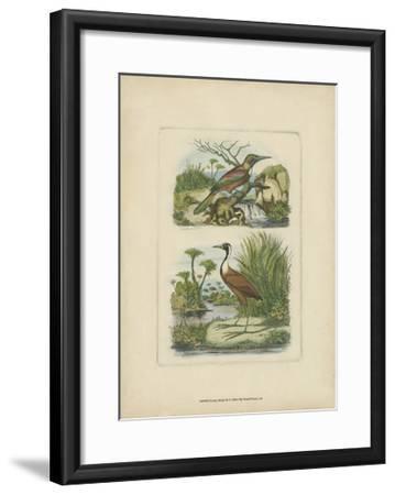 Exotic Birds III-Vision Studio-Framed Art Print