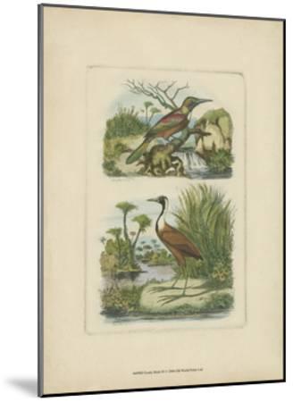 Exotic Birds III-Vision Studio-Mounted Art Print