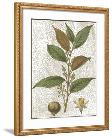 Fitch Leaves II-W. Fitch-Framed Art Print