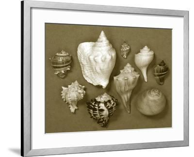 Shell Collector Series I-Renee W^ Stramel-Framed Photographic Print