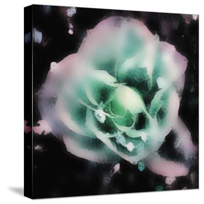 Evening Rose I-Danielle Harrington-Stretched Canvas Print