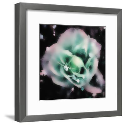 Evening Rose I-Danielle Harrington-Framed Art Print