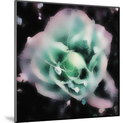 Evening Rose I-Danielle Harrington-Mounted Art Print