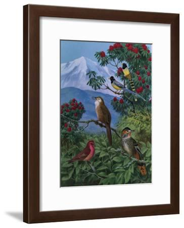 Yellow Billed Blue Magpies, a Rose Finch, Rufous Chinned Laughing Thrushes and Spiny Babbler Perch-Walter A. Weber-Framed Art Print