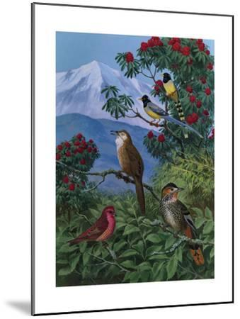 Yellow Billed Blue Magpies, a Rose Finch, Rufous Chinned Laughing Thrushes and Spiny Babbler Perch-Walter A. Weber-Mounted Art Print