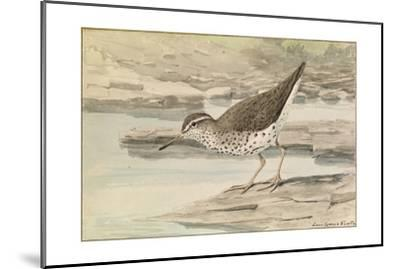 A Painting of a Spotted Sandpiper-Louis Agassi Fuertes-Mounted Art Print
