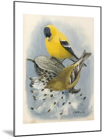 An Illustration of Male and Female American Goldfinchs-Louis Agassi Fuertes-Mounted Art Print