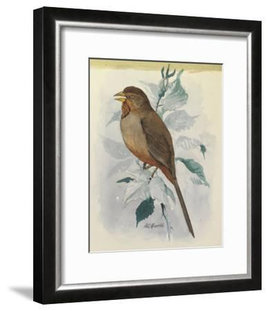 A Female and a Male Lazuli Bunting Bird Perches on a Tree Branch-Louis Agassi Fuertes-Framed Art Print