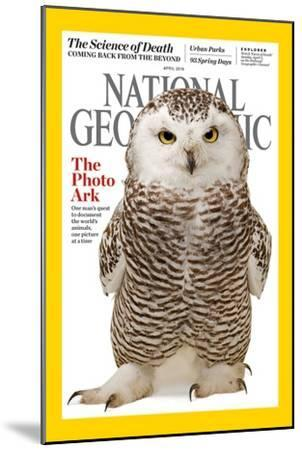 Cover of the April 2016 National Geographic Magazine-Joel Sartore-Mounted Photographic Print