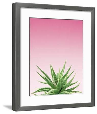 Succulent Simplicity I Pink Ombre Crop-Felicity Bradley-Framed Art Print
