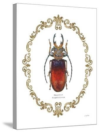 Adorning Coleoptera I-James Wiens-Stretched Canvas Print