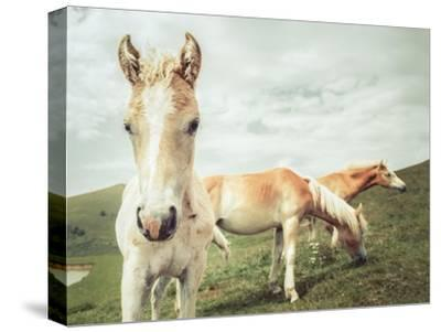Three Buddies-Aledanda-Stretched Canvas Print