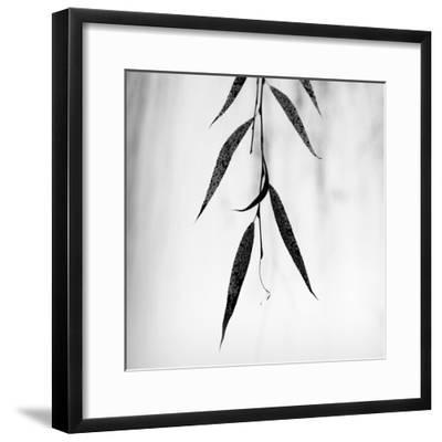 Willow Print No. 2-Nicholas Bell-Framed Photographic Print