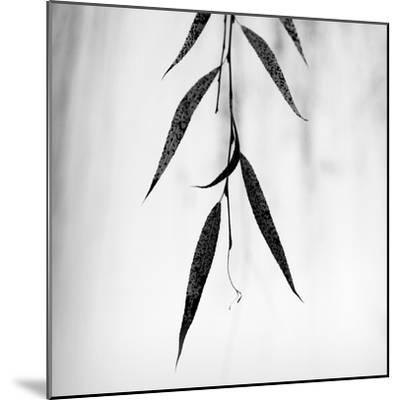 Willow Print No. 2-Nicholas Bell-Mounted Photographic Print