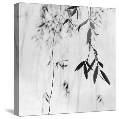 Willow Print No. 3-Nicholas Bell-Stretched Canvas Print