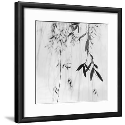 Willow Print No. 3-Nicholas Bell-Framed Photographic Print