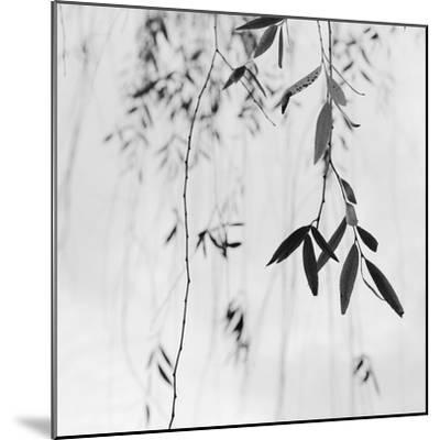 Willow Print No. 3-Nicholas Bell-Mounted Photographic Print