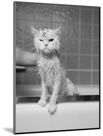 Bert's Bath-James Flad-Mounted Photographic Print