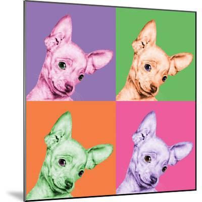 Sweet Chihuahua Pop-Jon Bertelli-Mounted Photographic Print