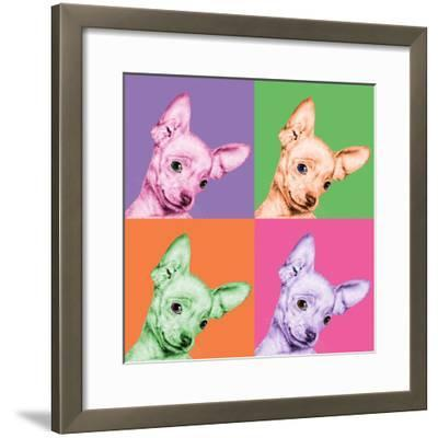 Sweet Chihuahua Pop-Jon Bertelli-Framed Photographic Print
