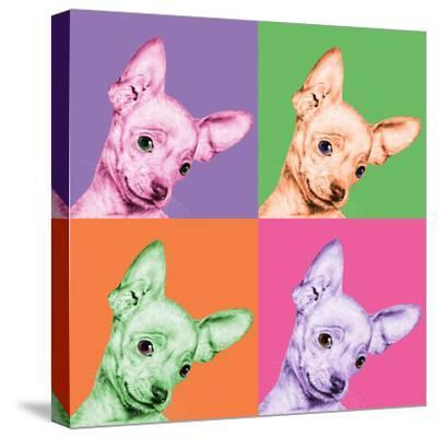 Sweet Chihuahua Pop-Jon Bertelli-Stretched Canvas Print