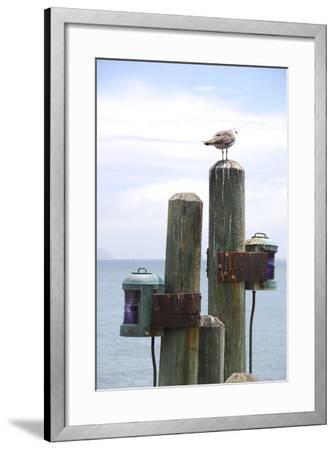 Seagul on Sausalito Pier, Marin County, California-Anna Miller-Framed Photographic Print