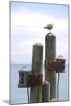 Seagul on Sausalito Pier, Marin County, California-Anna Miller-Mounted Photographic Print