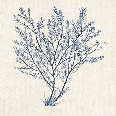 Indigo Algae II-Jennifer Goldberger-Framed Art Print