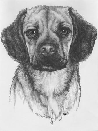 Mr. Puggle-Barbara Keith-Giclee Print