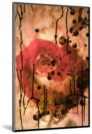 Red Rose Through Paper with Ink Drawing-Daniel Root-Mounted Giclee Print
